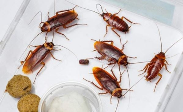 How To Prevent Cockroaches In Your Kitchen Cabinets Fooyoh