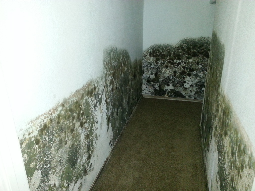 The Following Are Ways That Can Effectively Kill Black Mold
